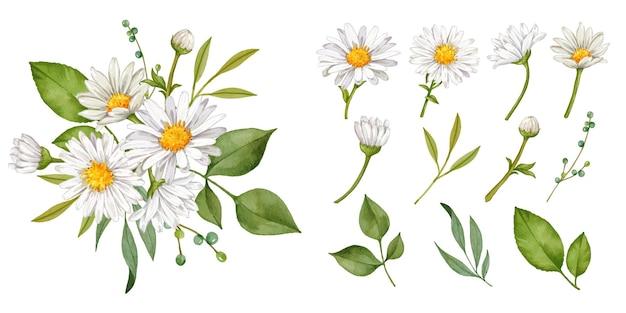 Coleção de buquê de flores de margarida desenhada à mão