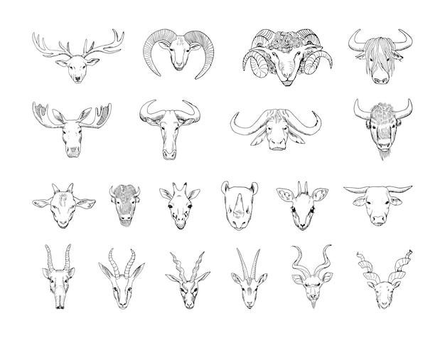 Coleção de cabeças de animais monocromáticas com chifres em estilo de desenho