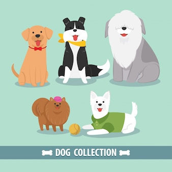 Coleção de cachorro