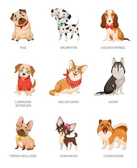 Coleção de cães fofos isolados no branco