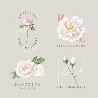 Coleção de cartão design floral