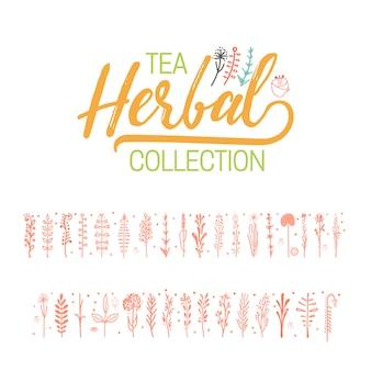 Coleção de chá de ervas