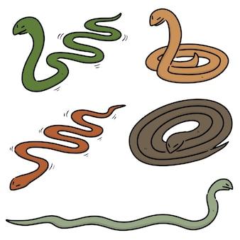 Coleção de cobras isoladas em branco