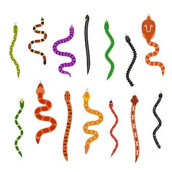 Coleção de cobras plana de vetor isolada no fundo branco