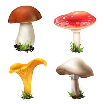 Coleção de cogumelos da floresta realista