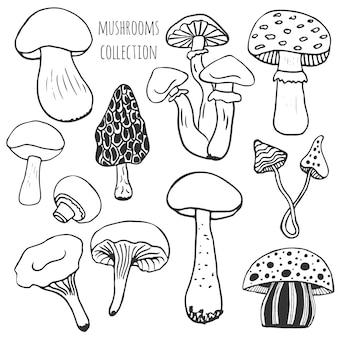 Coleção de cogumelos desenhados à mão. conjunto de vetores doodle com cogumelos comestíveis e venenosos.