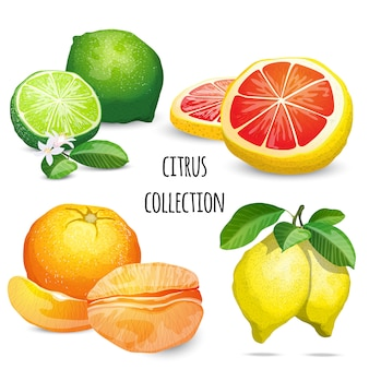 Coleção de coloração cítrica
