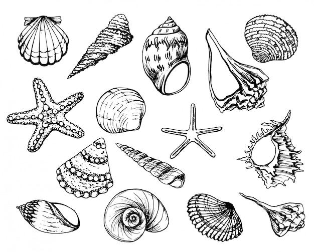 Coleção de conchas.