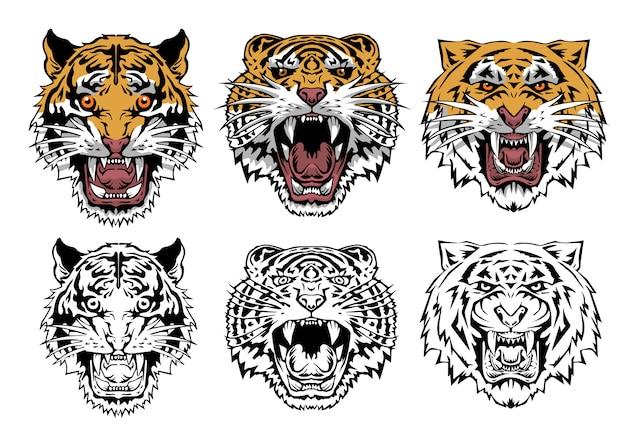 Coleção de conjunto de tigre