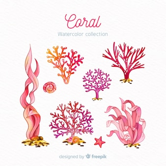 Coleção de coral aquarela