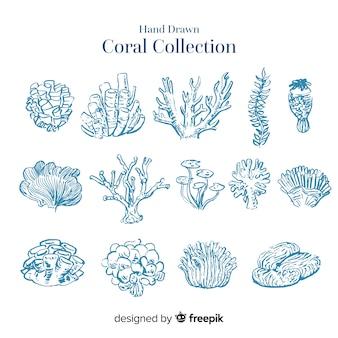 Coleção de coral incolor de mão desenhada
