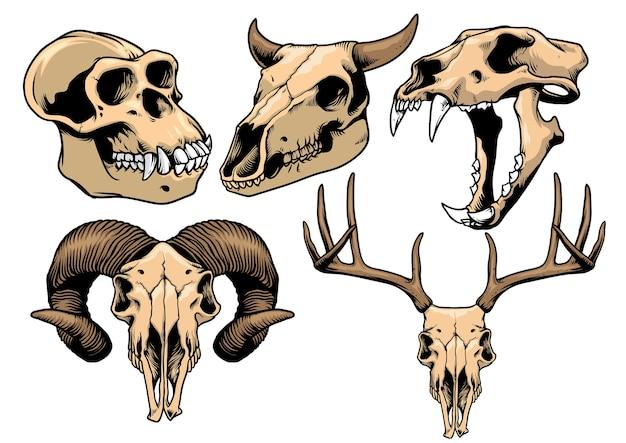 Coleção de crânio animal