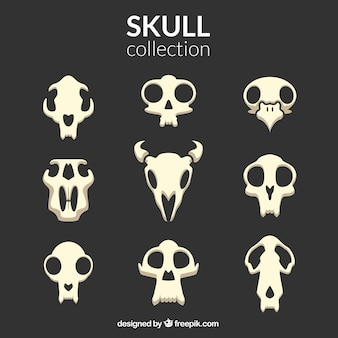 Coleção de crânios de diferentes formas