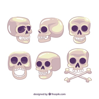 Coleção de crânios em posições diferentes