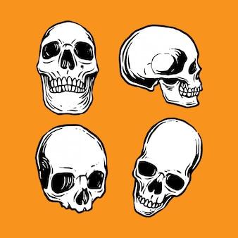Coleção de crânios