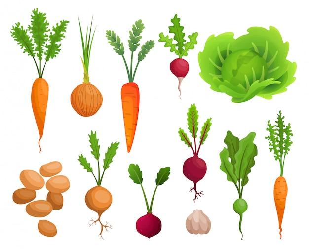 Coleção de cultivo de vegetais. plantas mostrando a estrutura da raiz. alimentos orgânicos e saudáveis. produto agrícola para menu de restaurante ou rótulo de mercado. banner de horta. cartaz com vegetais de raiz