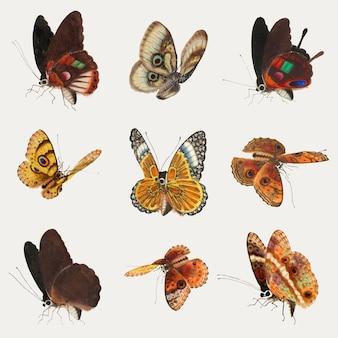Coleção de desenho vintage de vetor de borboleta e mariposa