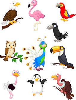Coleção de desenhos animados de pássaro