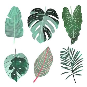 Coleção de diferentes folhas tropicais