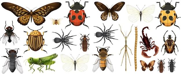 Coleção de diferentes insetos isolada no fundo branco