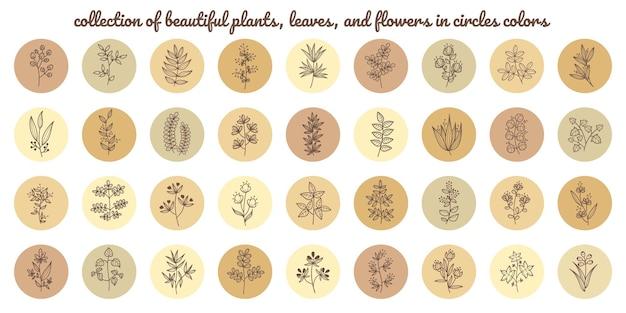 Coleção de elementos de belas plantas, folhas e flores em círculos de cores