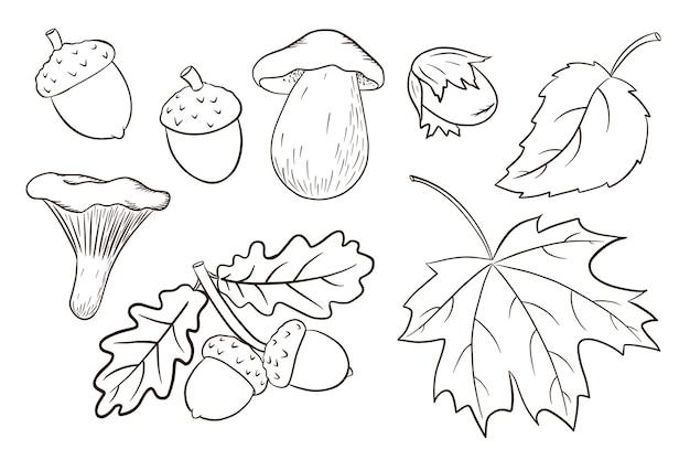 Coleção de elementos de colheita desenhada de mão. carvalho e folhas de bordo, bolotas, cogumelos. conjunto decorativo de floresta para design e decoração de impressão, adesivo, convite e cartões comemorativos. vetor premium