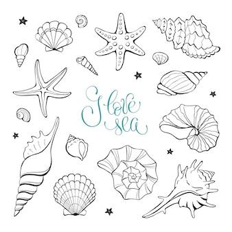 Coleção de elementos de conchas do mar