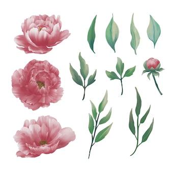 Coleção de elementos de flor de peônia aquarela