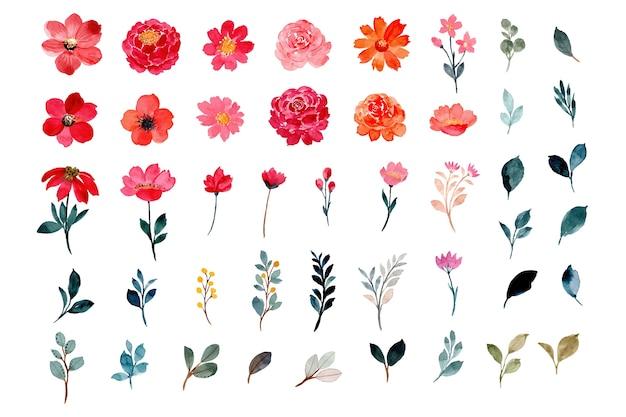 Coleção de elementos de flores e folhas em aquarela