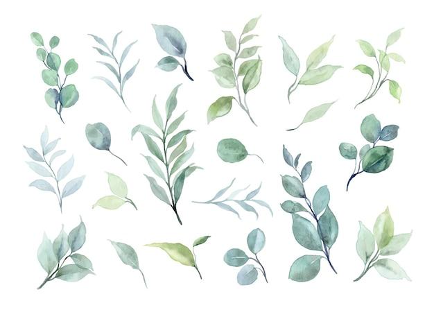 Coleção de elementos de folhas verdes com aquarela