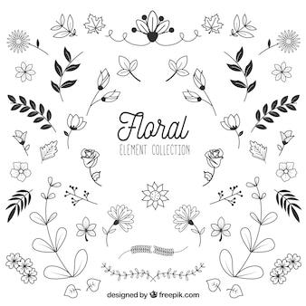 Coleção de elementos florais na mão desenhada estilo