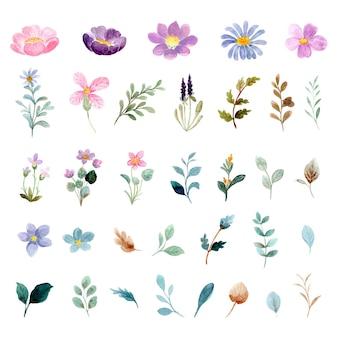 Coleção de elementos florais selvagens em aquarela