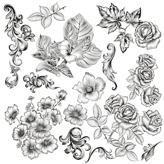 Coleção de elementos florais