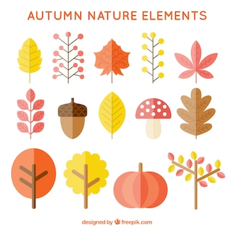 Coleção de elementos naturais do outono