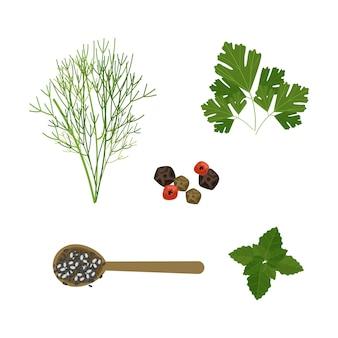 Coleção de ervas com óleo essencial
