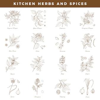 Coleção de ervas e especiarias de cozinha