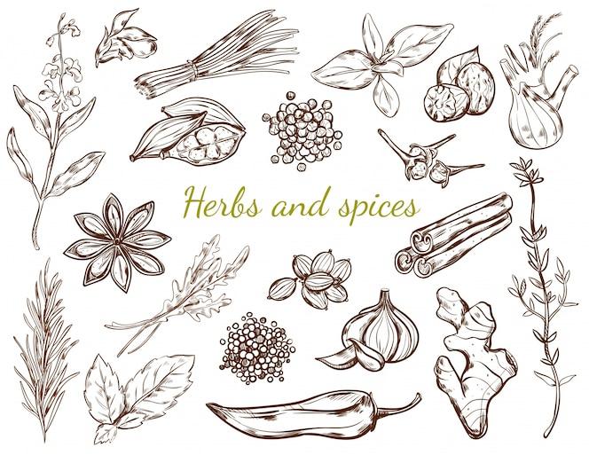 Coleção de ervas e especiarias