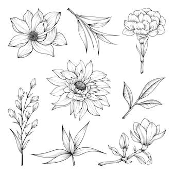 Coleção de ervas e flores silvestres e folhas isoladas em branco