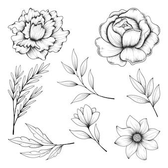 Coleção de ervas e flores silvestres e folhas isoladas em branco.