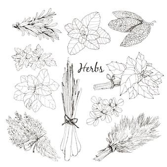 Coleção de ervas.