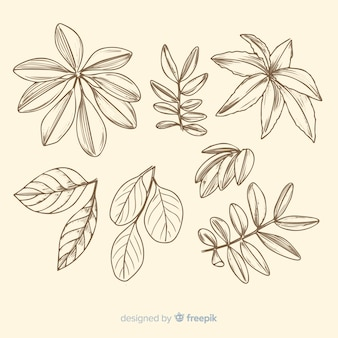Coleção de esboços botânicos