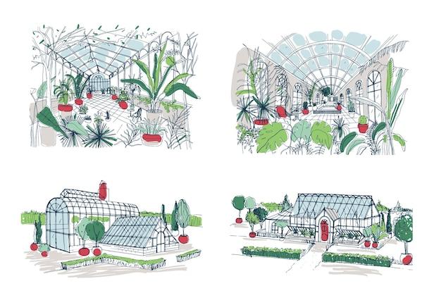 Coleção de esboços de grandes estufas cheias de plantas tropicais. conjunto de desenhos ásperos de estufas com palmeiras exóticas crescendo em vasos. vistas internas e externas. ilustração colorida do vetor.