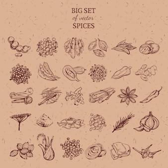 Coleção de especiarias e ervas naturais