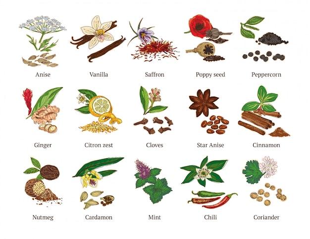Coleção de especiarias saudáveis de esboço colorido