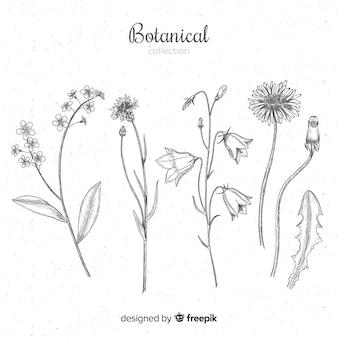 Coleção de espécies de botânica e erva de mão desenhada
