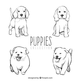 Coleção de filhotes de cachorro bonitos