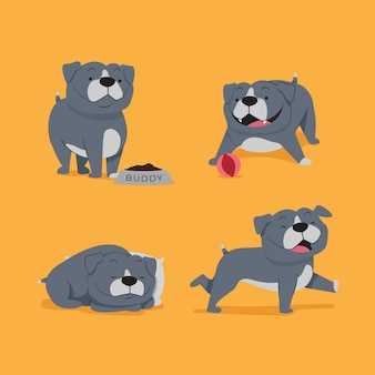 Coleção de filhotes pitbull de design plano