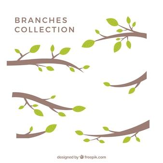 Coleção de filial estilizado silhuetas