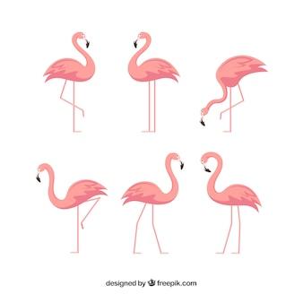 Coleção de flamingos com diferentes posturas em estilo simples