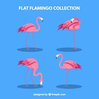Coleção de flamingos com poses diferentes